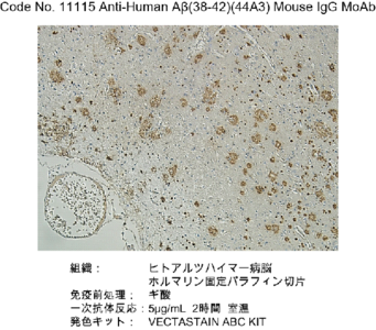 #11115 Anti-Human Amyloidβ (38-42) (44A3) Mouse IgG MoAb