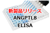 Human ANGPTL8 Assay Kit - IBL 新発売!
