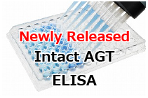 Human Intact Angiotensinogen Assay Kit - IBL Newly Released!