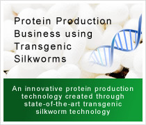 Protein Production Business using Transgenic Silkworms
