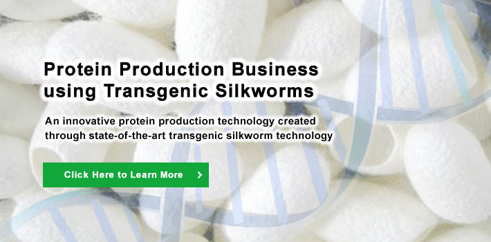 An innovative protein production technology created through state-of-the-art transgenic silkworm technology