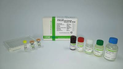#27706 Mouse/Rat Intact Proinsulin Assay Kit - IBL
