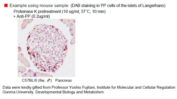 DAB staining in PP cells of the islets of Langerhans