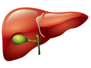 NASH Research - Increasing fibrosis and inflammatory markers with liver function enzyme AST and ALT